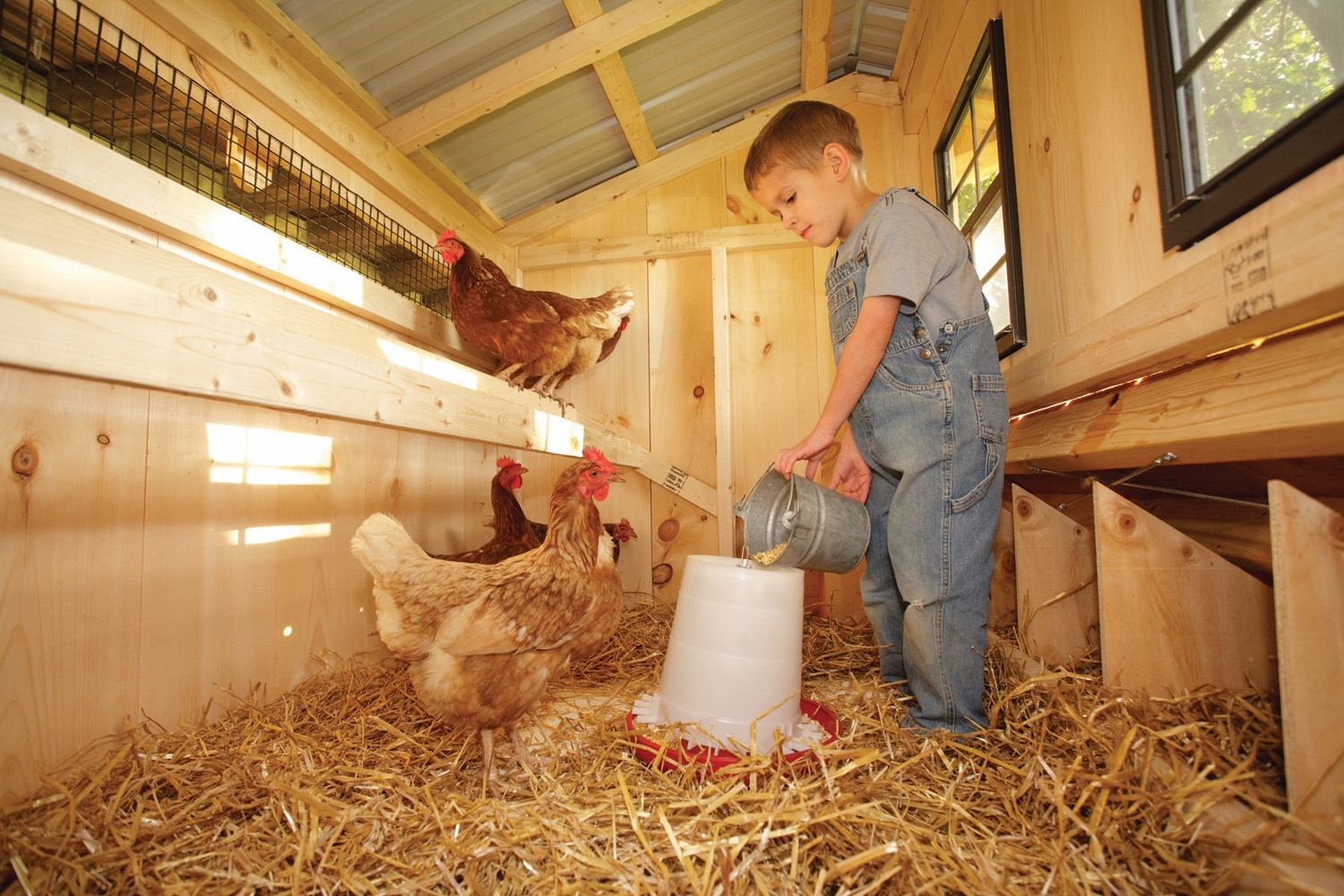 Backyard chicken coop interior
